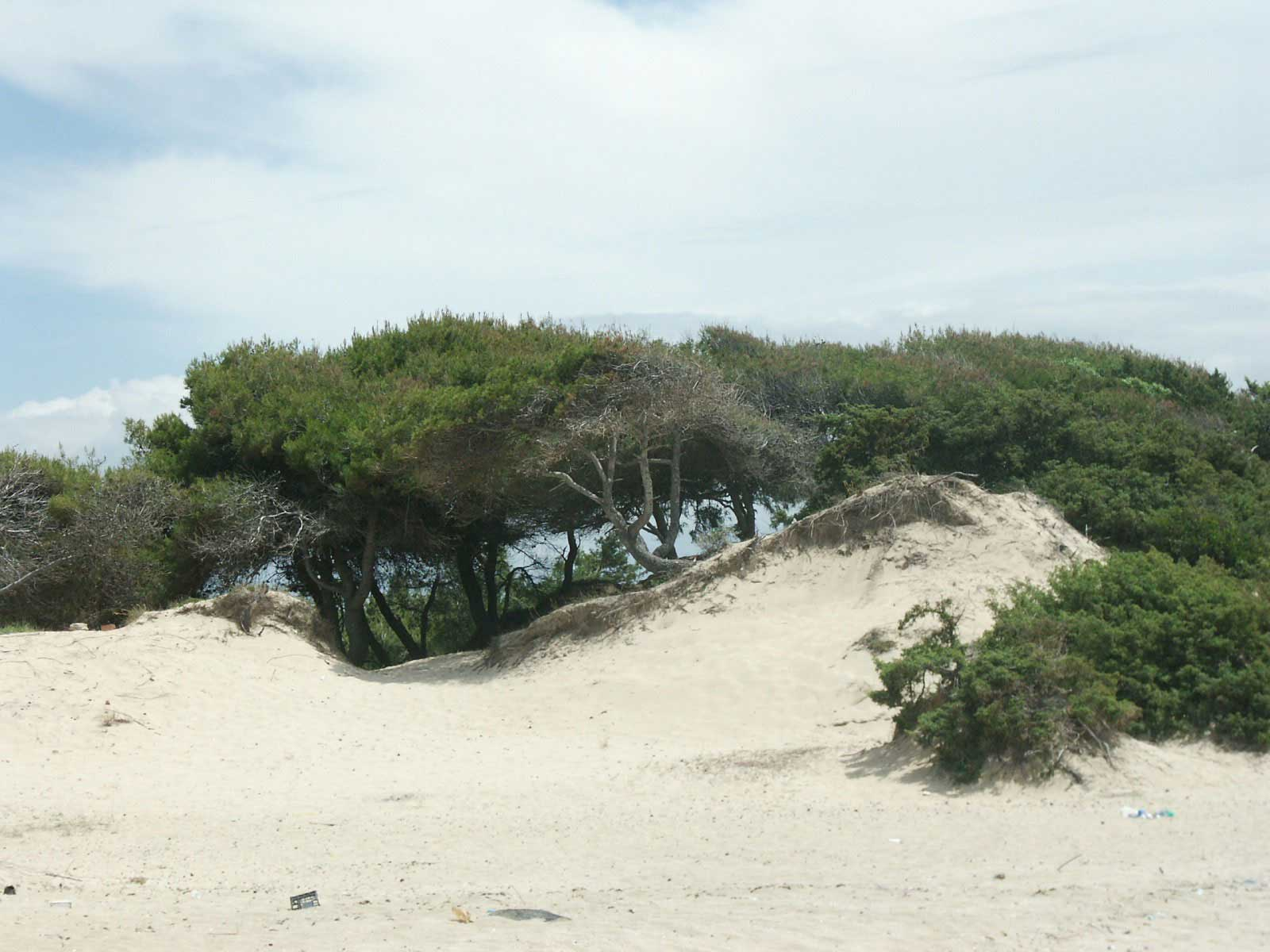 Dune and trees